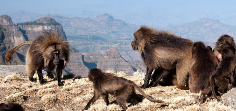 Треккинг в горах Симиен - мировое наследие ЮНЕСКО