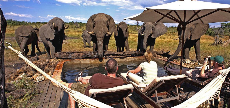 Элитное сафари в Зимбабве, Национальный парк Хванге