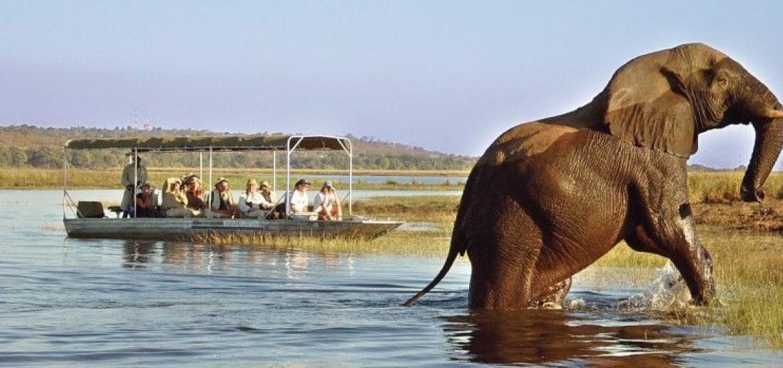 Сафари в Южной Африке