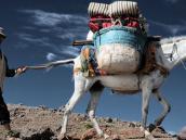 Тур в Марокко на Тубкаль, погонщик с ослом