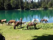 конные туры, лошади,