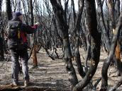 Тур в Патагонию, выженный лес при подходе к приюту Куэрнос