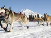 На собаках по Камчатке