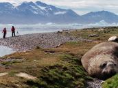 Тур в Антарктиду, морской слон