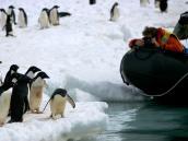 Фотосъемка пингвинов