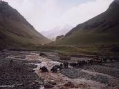 Фото из тура в Аргентину в 2006 году. Треккинг на подходе к Аконкагуа. Брод каравана вьючных мулов.