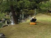 Фото из тура в Японию в 2012 году. Работа этого садовника - выдирать вредный мох, а полезный - оставлять. Так-то вот!..