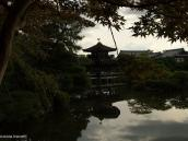 Фото из тура в Японию в 2012 году. Японские клены - традиционный элемент в оформлении садов, интерьеров и даже подаваемой еды.