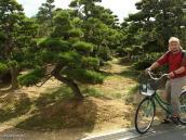 Фото из тура в Японию в 2012 году. Дальше мы переехали в долину Аска, это место древней столицы государства, когда оно еще не называлось Японией. Фото питомника, где выращивают такие вот деревья. Кстати, одно такое дерево стоит не очень дорого, около 50 тыс. рублей. Однако, чтобы его до такого вида вырастить, надо ухаживать за ним около 30 лет.