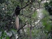 Фото из тура в Танзанию в 2004 году. Высоко в ветвях - мартышка-коллабус с пышным белым хвостом