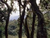 Фото из тура в Танзанию в 2004 году. Склоны Меру покрыты буйной растительностью до самой седловины между Большой и Малой вершинами.