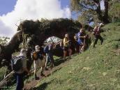 Фото из тура в Танзанию в 2004 году. Треккинг: второй день подъема  от лагеря Мириакамба  к лагерю Сэдл-Хат