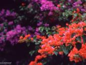 Фото из тура в Танзанию в 2004 году. Повсюду в Аруше  глаз радуют яркие цветы