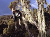Фото из тура в Танзанию в 2005 году. Лишайники опутывают кустарник на плато Шира.