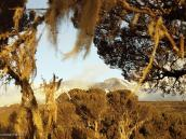 Фото из тура в Танзанию в 2005 году. Закат на плато Шира. На заднем плане - Кибо.