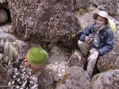 Фото из тура в Танзанию в 2005 году. Короткий привал. Лобелии - зеленые друзья.