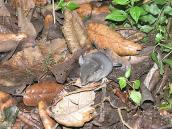 Фото из тура в Танзанию в 2005. Под пологом килиманджарского леса копошатся микроскопические грызуны.