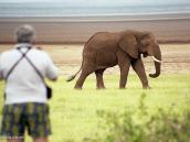 Фото из тура в Танзанию в 2005 году. Фотоохота на слона.
