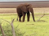 Фото из тура в Танзанию в 2005 году. Слониха бредет по краю озера Маньяра.