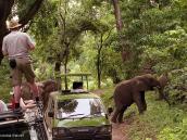 Фото из тура в Танзанию в 2005 году. Семья слонов переходит дорогу рядом с туристскими джипами в Маньяре.