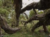 Фото из тура в Танзанию в 2011 году. Между хижинами Мириакамба и Сэдл Хат склоны горы Меру украшает причудливый и живописный лес.