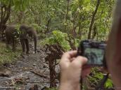 Фото из тура в Танзанию в 2011 году. Слон на водопое, Маньяра, сафари.
