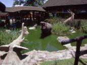 """Фото из тура в Танзанию в 2004 году. """"Большая Пятерка"""" в центре города"""