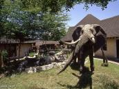 Фото из тура в Танзанию в 2004 году. Так близко к настоящему слону лучше не подходить.