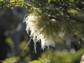 Фото из тура в Патагонию в 2012 году. Вот такой растущий на кустах мох говорит о том, что воздух здесь чрезвычайно чист.