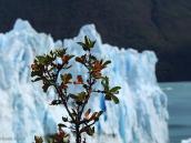 Фото из тура в Патагонию в 2012 году. Лед и жизнь, Перито Морено, Патагония.