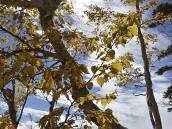Багряный лес на склонах гор, Япония