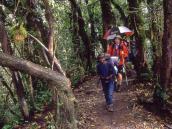 Чинное шествие во главе с гидом - подъем сквозь лес к лагерю Мачаме.