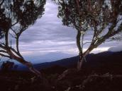 С плато Шира открывается вид  на г. Меру и прилегающую равнину.
