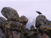 Плато Шира. Ворон охраняет подступы к вершине.
