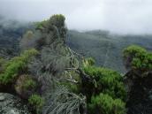 Редкая растительность  на плато Шира.
