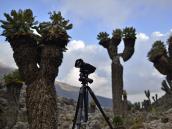 Съемка таймлапса в лагере Барранко (3950 м) в роще сенеций.