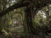 Треккеры в лесу на склоне Килиманджаро, начало восхождения