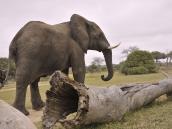 Слон медленно проходит мимо