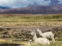 Тур в Перу и Боливию, восхождение в перу и боливии, треккинг в перу и боливии