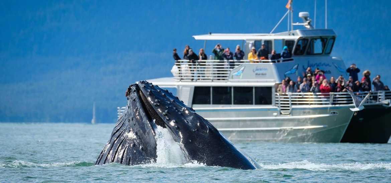 Круиз по Аляске: в заливе китов