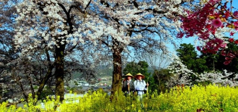 тур в Японию, треккинг в Японии, Дорогами Кобо Даиши, паломничество на Сикоку, тропа 88 храмов