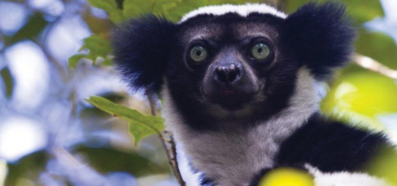 Тур на Мадагаскар: В гостях у пиратов