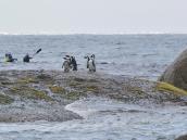Пингвины, каякинг, Саймонстаун