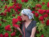 Роскошные розы в Суздале. Велотур по Золотому Кольцу.