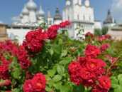 Цветник в кремле Ростова Великого