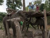 Воды Слонам! Фото из тура в Бирму (Мьянму) и Таиланд автор Иван Прилежаев (с)