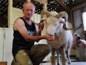 тур в Новую Зеландию, стрижка овец на ферме в Кайкуре