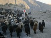 Фото из тура в Иран в 2011 году. На склонах Демавенда часто можно увидеть большие отары и пастухов. Мясо здесь настоящее, без химии, да!