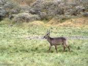 Фото из тура в Танзанию в 2003 году. Антилопа.