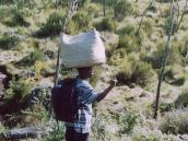 Фото из тура в Танзанию в 2003 году. Носильщики (портеры) переносят грузы на голове.